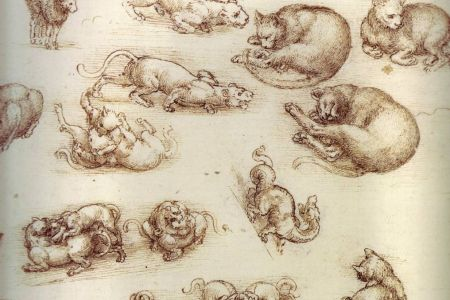 43-Leonardo_da_Vinci_drawing_of_cats.jpg