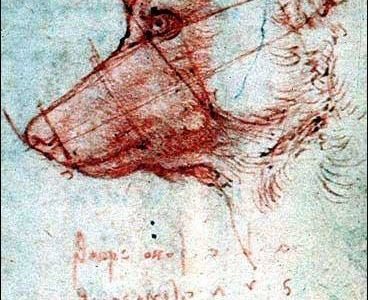 42-Leonardo_drawing_of_dog.jpg